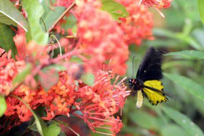 Taman kupu-kupu Gita Persada - tempat wisata bandar lampung - yopie pangkey