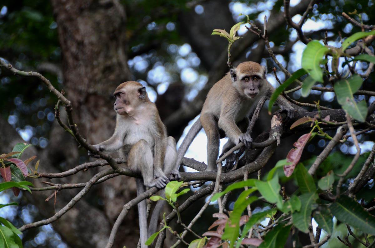 hutan monyet - wisata bandar lampung - yopie pangkey