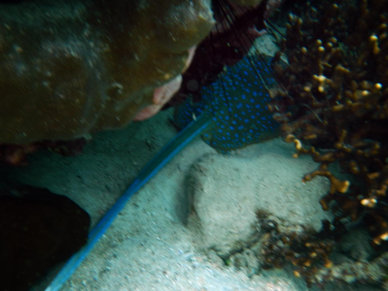 wisata pulau pahawang - pahawang island lampung - yopie pangkey 4