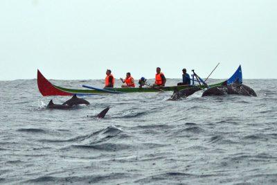 Lumba lumba Teluk Kiluan - tempat wisata di Lampung - Yopie Pangkey.jpg