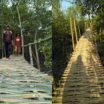 Wisata Hutan Mangrove di Desa Sriminosari Lampung Timur