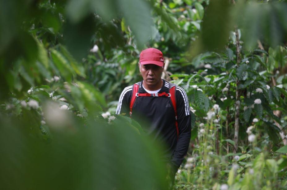trekking diantara kebun kopi - Ferdi Awed