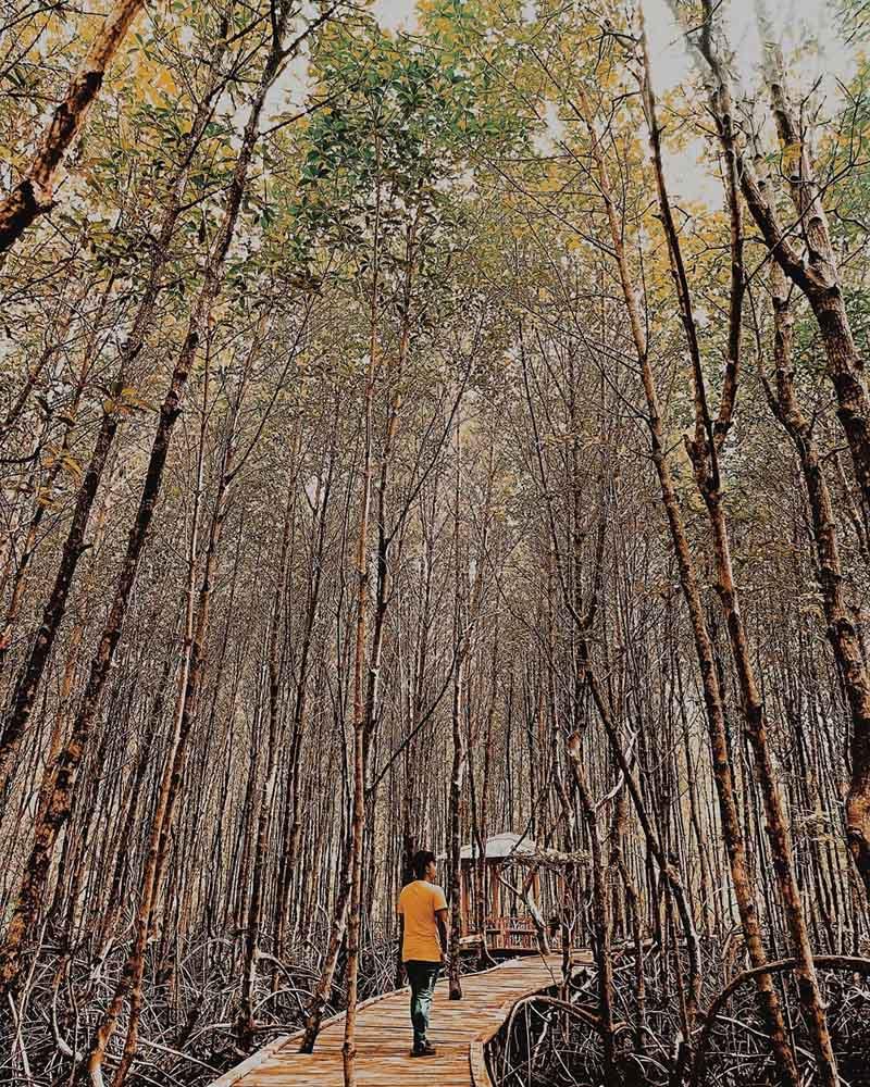 Hutan Bakau Pantai DewiMandapa Pesawaran - alfiaan_agung