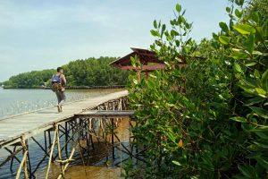 Hutan Mangrove Petengoran Desa Gebang Pesawaran - kelilinglampung.net - Yopie Pangkey - 1
