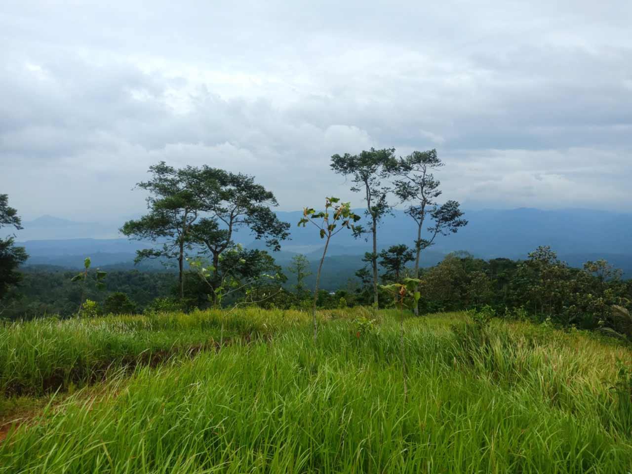 Jalur menuju Wisata Puncak Punggung Naga Sukmoilang Pesawaran Indah - kelilinglampung.net - 1