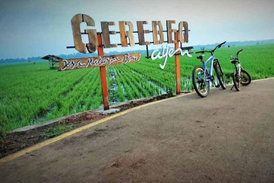 Foto Gambar Wisata Sawah GerebeQ Ayem - Desa Mataram Baru Lampung Timur - 2